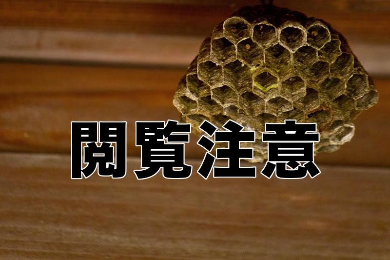 【閲覧注意】命がけでスズメバチを食べてみた感想!