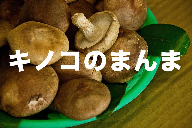 【エロ注意】卑猥だけどめっちゃうまい椎茸スナック「茸のまんま」を食べてみた