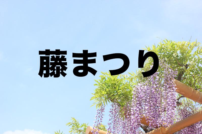 【藤まつり】藤枝市の蓮花寺池公園でさわやかな春の訪れを楽しもう!
