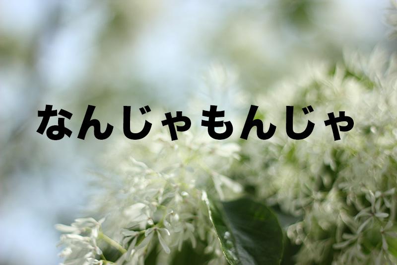 【お花見しよう】城北公園に咲くなんじゃもんじゃって白い花なんじゃ?