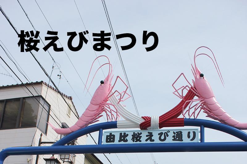 【静岡グルメ】桜えびまつり開催!由比漁港で食べる桜えびのかき揚げが死ぬ程うまい!