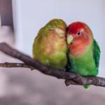 夫婦円満の秘訣!仲良し夫婦になる為の考え方