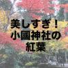 【小國神社】遠州の小京都で紅葉とグルメを楽しむ休日はいかが?
