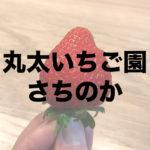【静岡いちご】まる太いちご園のいちごはスーパーのいちごとは別次元!